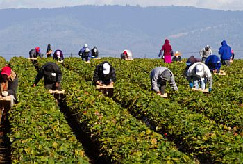 California to Allow Work Permit for undocumented farm workers