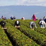Canada making it easier for farm sector labor to immigrate to Canada and get Permanent residency status