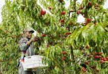 Migrant farm workers demanding Immigrants Status