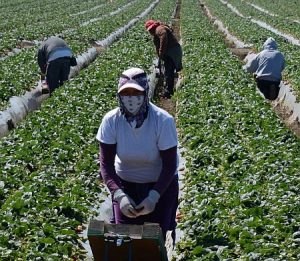 US Farmers Don't Favor Trump's Anti-Immigrant Rhetoric