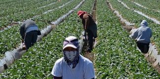 US Farmers Don't Favor Trump's Anti-Immigrant Rhetoric