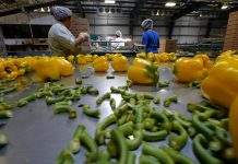 Canada Changes Controversial Four-in-four-out rule to help farm workers