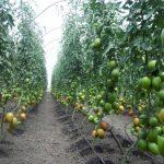 Immigration under Self-Employed Farmer Stream