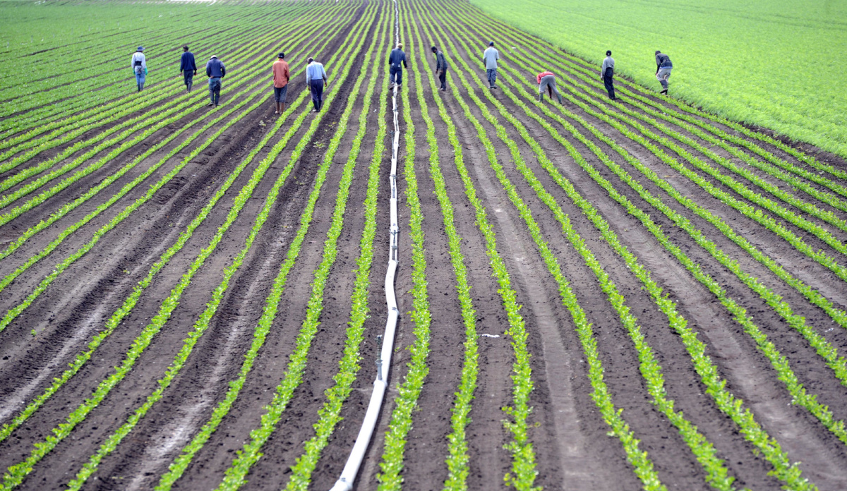 Seasonal Agricultural Worker Program of Canada