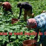Temporary Visa Program for Farmers as Guest Workers to survive in the US