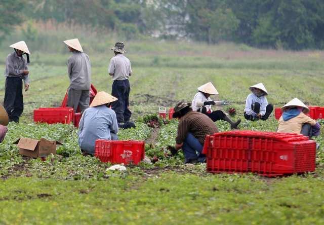 farm labor shortage In Canada