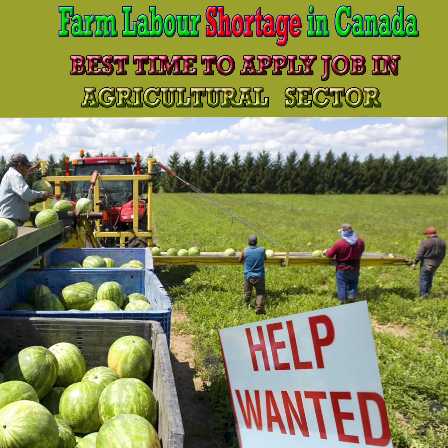 Farm Labor Shortage in Canada is Expected to Rise: An Insight